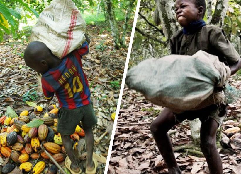 Nestlé, Mars et Hershey's enfin poursuivis pour traite d'enfants esclaves