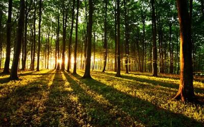 Et si les arbres dormaient la nuit ? Une étude qui va en surprendre plus d'un !