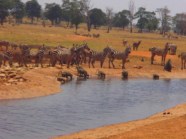 Il-se-rend-lui-même-au-cœur-de-la-savane-pour-donner-de-leau-aux-animaux-qui-souffrent-de-la-sécheresse-6