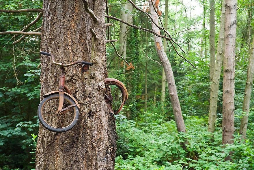 vélo-abandonné-arbre