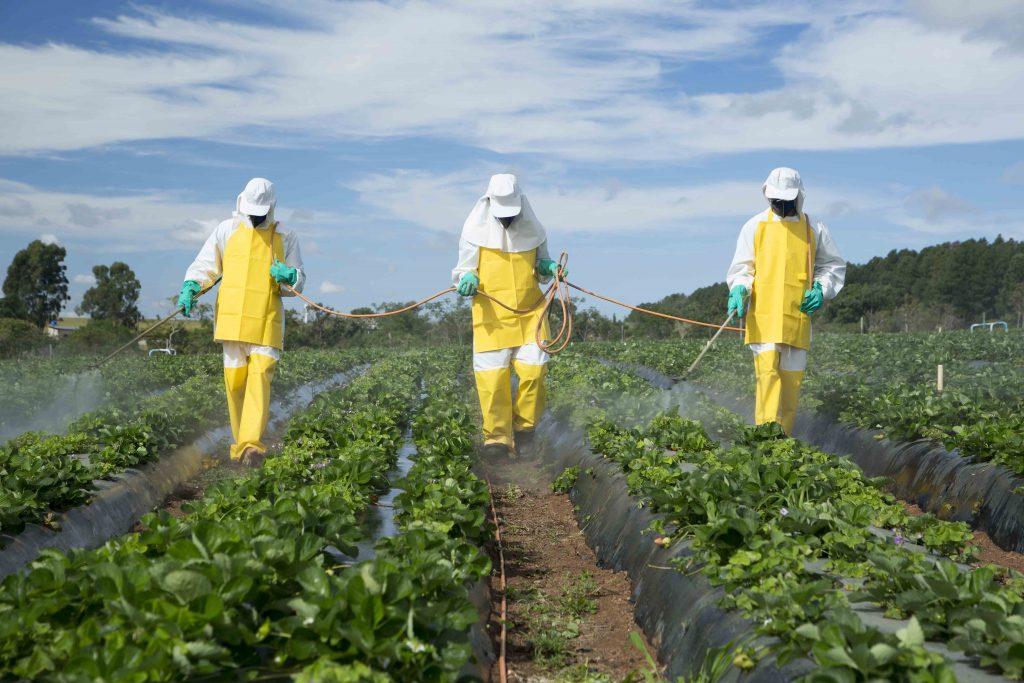 Paris, Grenoble, Clermont-Ferrand, Lille et Nantes interdisent les pesticides sur leur territoire